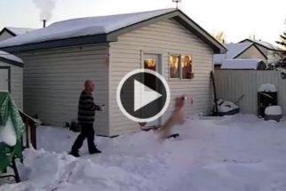 Cãozinho 'ataca' o drone que seu tutor ganhou de presente no Natal