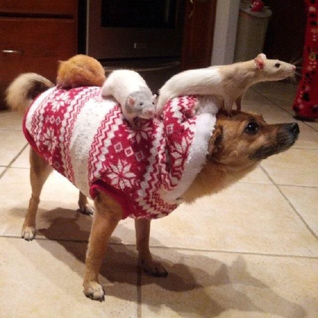caozinho-de-casaco-junto-a-seus-amigos-ratos