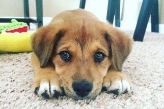 10 fotos de cães recém-adotados em seu novo lar