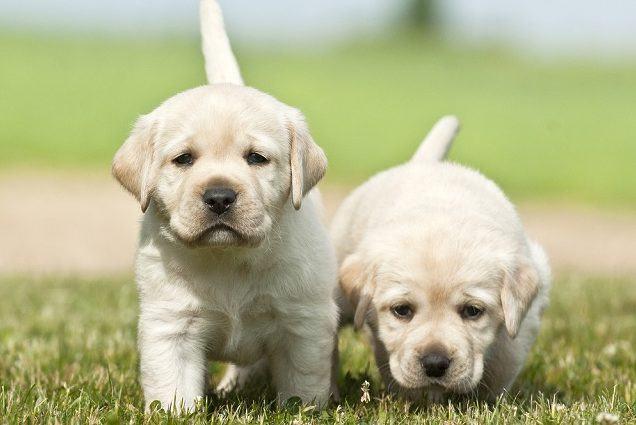 Como devo satisfazer as necessidades do filhote de cão