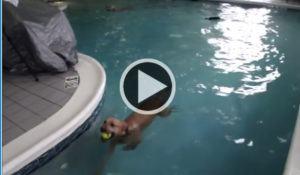 doente-cachorro-consegue-nadar-em-piscina-pela-ultima-vez