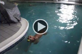 Doente, cachorro consegue nadar em piscina pela última vez