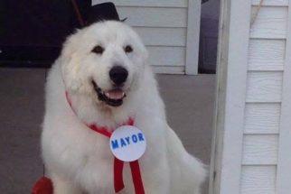 12 cães que conseguiram vencer o ano de 2016