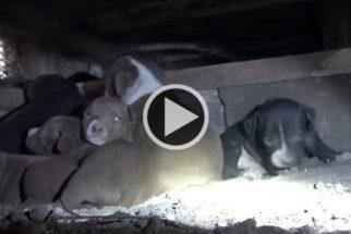 Esperança: família de cães abandonados é resgatada e tem novo lar