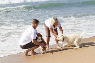 Férias: Veja orientações sobre os cuidados necessários com o pet na praia