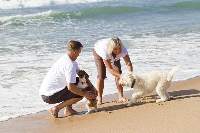 Um dos cuidados necessários com o pet na praia é mantê-lo na coleira para evitar que se perca