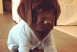 10 fotos adoráveis de cães usando pijamas