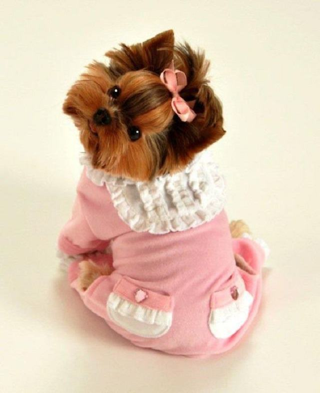 filhote-de-yorkshire-usando-pijama