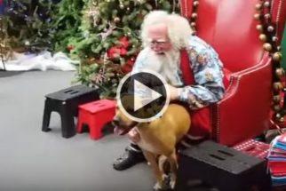Fofura: cãozinho não contém alegria ao ver Papai Noel