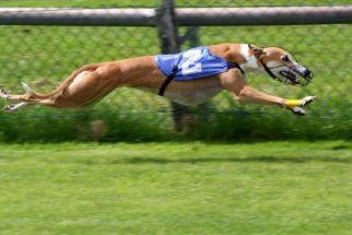 8 cães que são verdadeiros atletas e você precisa conhecer