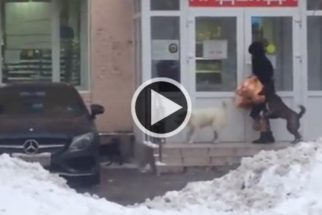 Grupo de cães 'roubam' senhora que estava saindo de mercadinho
