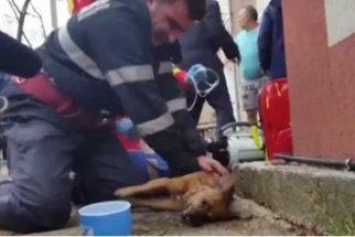 Herói: bombeiro salva cão com colapso após inalar fumaça