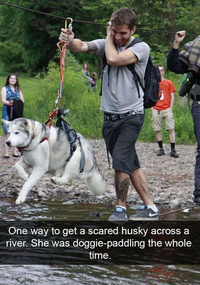 husky-com-medo-de-agua
