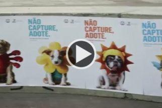 Inspirado em game, campanha busca salvar animais do abandono