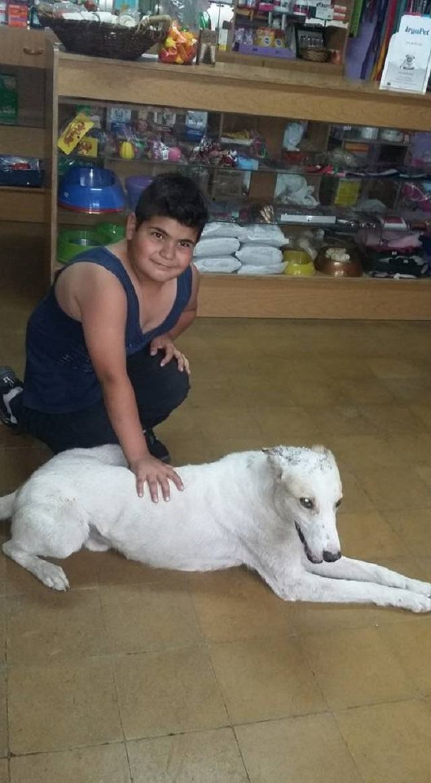 mauco-e-rocco-no-veterinario