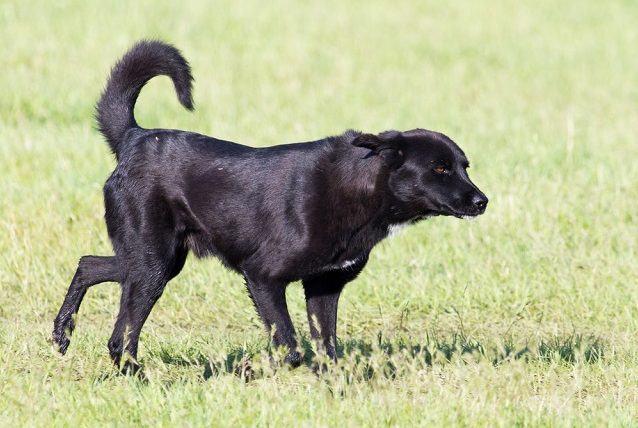 Os 10 cachorros superespertos. Conheça quem são eles