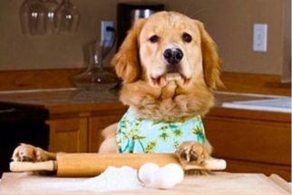 Para rir: conta no twitter mostra cães agindo como pessoas