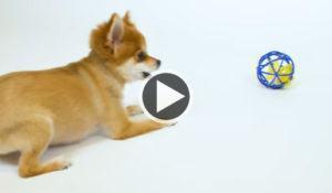 para-rir-trio-canino-nao-sabe-como-lidar-com-brinquedos-para-gatos
