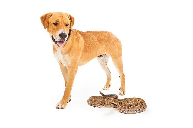 Picadas de cobras em cachorros: como devo agir?
