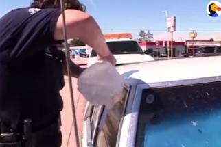Policial quebra vidro de carro para salvar cães presos por dois dias