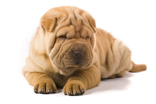 Problemas de pele: doenças pouco comuns que afetam os pets