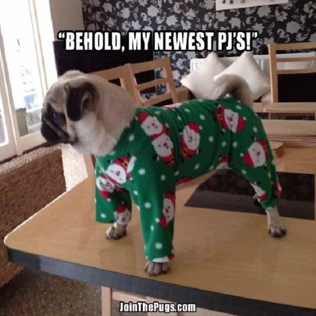 pug-mostrando-seus-novos-pijamas