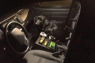 Cãozinho perdido entra em viatura e ganha carona para sua casa