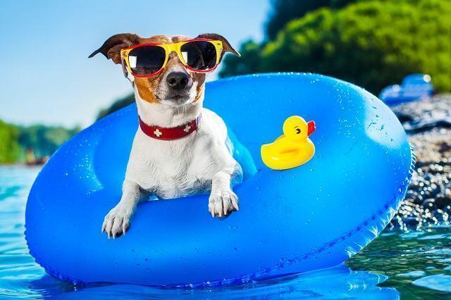 Verão: dicas de como aproveitar esta época do ano com o pet
