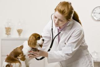 Como posso encontrar um bom veterinário para o meu cachorro?