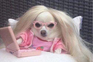10 tweets que mostram que cães são as verdadeiras 'divas' da internet