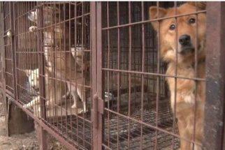 200 cães são salvos de fazenda de carne na Coreia do Sul