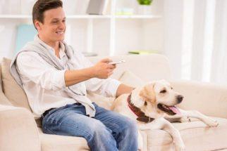 4 documentários sobre o mundo canino para você assistir na Netflix