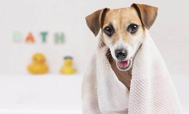 8 verdades sobre banhos em cães que você precisa saber