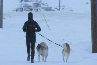 Homem encara frio ártico diariamente para passear com cães de abrigo
