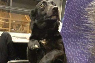 Para rir: cãozinho tenta agir como humano dentro de trem