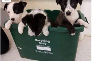 Abandonados em lixeira, filhotes são salvos graças a cadela