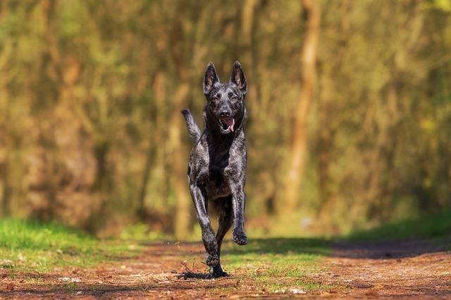 Adestrando o cão em lugares diferentes. Parece difícil mas não é