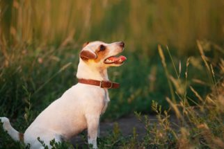 Como ensinar ao seu cachorro o exercício 'vir quando chamado'