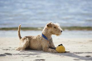 Cortar por estética o rabo do cão é ou não crime?