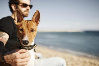 Calor e praia aumentam as chances do cão contrair verme do coração