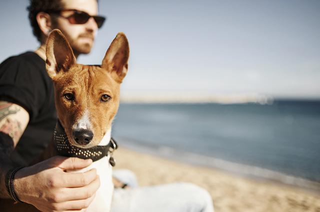 O cão infectado pelo verme do coração apresenta diminuição de peso, cansaço excessivo, tosse e falta de ar