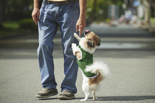 """O comando """"levanta"""" é um dos primeiros que devem ser ensinados ao cãozinho"""