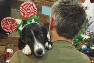 10 cães que não querem aceitar que o Natal já passou