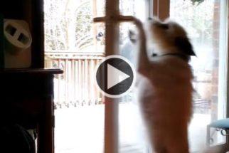 Cadelinha se mostra muito esperta na hora de fugir do banho