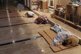 Turcos se unem para ajudar animais de rua durante o inverno