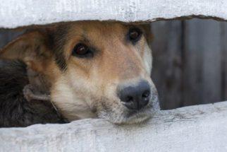Câmara aprova projeto que tipifica condutas criminosas contra animais