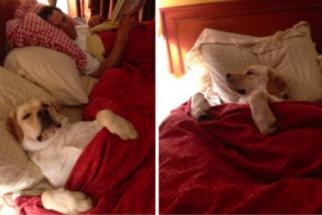 10 postagens de tumblr provando que cães são os melhores
