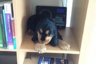 10 verdades sobre ter um cãozinho de pequeno porte
