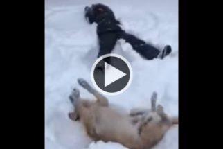 Cãozinho vê tutor fazendo anjo na neve e decide imitar