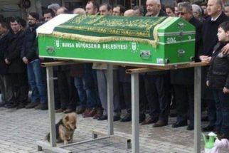 Emocionante: cão visita túmulo do seu tutor todos os dias